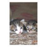 Kitten siblings stationery paper