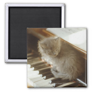 Kitten sitting on piano keyboard, close-up 2 inch square magnet
