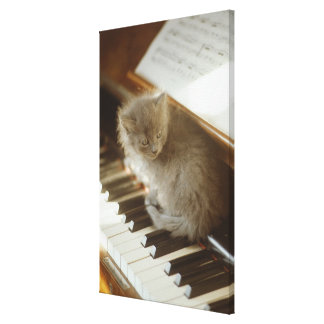 Kitten sitting on piano keyboard, close-up canvas print