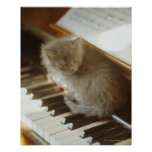 Kitten sitting on piano keyboard, close-up poster