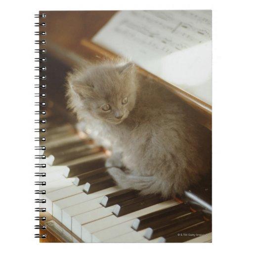 Kitten sitting on piano keyboard, close-up spiral note books