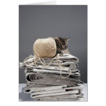 Kitten sitting on pile of newspapers cards