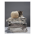 Kitten sitting on pile of newspapers print