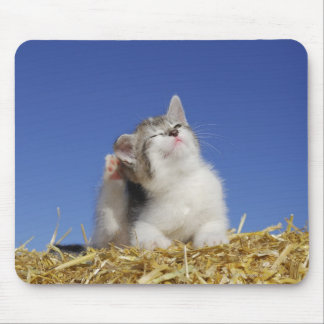 Kitten sitting on straw, scratching, close-up mouse pad