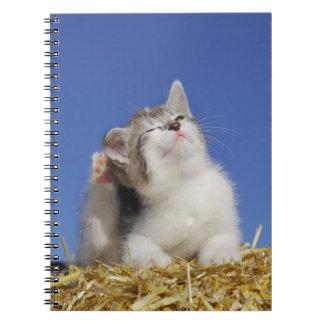 Kitten sitting on straw, scratching, close-up notebook