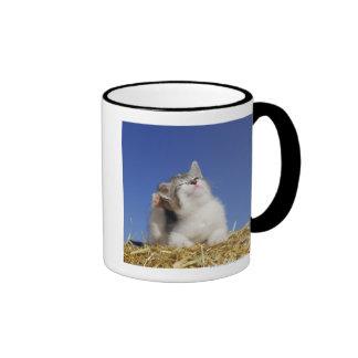 Kitten sitting on straw, scratching, close-up ringer mug