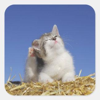 Kitten sitting on straw, scratching, close-up square sticker