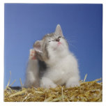 Kitten sitting on straw, scratching, close-up large square tile