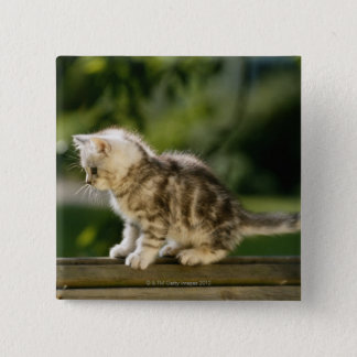 Kitten sitting on top of bench, side view button