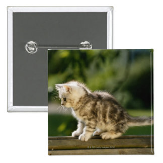 Kitten sitting on top of bench, side view pinback buttons
