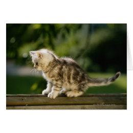 Kitten sitting on top of bench, side view card