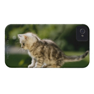 Kitten sitting on top of bench, side view iPhone 4 cover