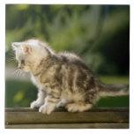 Kitten sitting on top of bench, side view ceramic tile