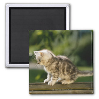 Kitten sitting on top of bench, side view magnet