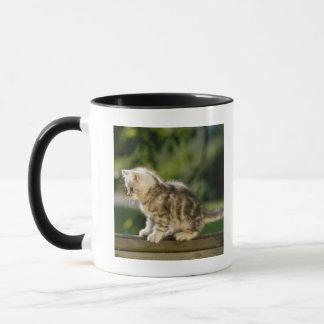 Kitten sitting on top of bench, side view mug
