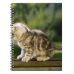 Kitten sitting on top of bench, side view notebook