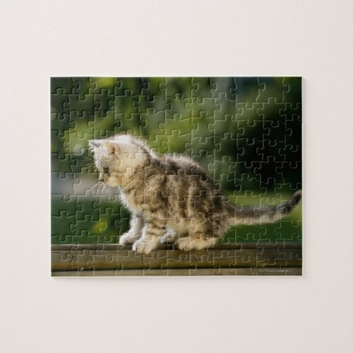 Kitten sitting on top of bench, side view jigsaw puzzle