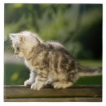 Kitten sitting on top of bench, side view large square tile