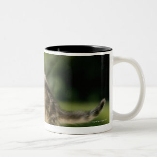 Kitten sitting on top of bench, side view Two-Tone coffee mug