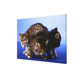 Kitten sitting on top of each other canvas print
