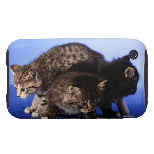 Kitten sitting on top of each other iPhone 3 tough case