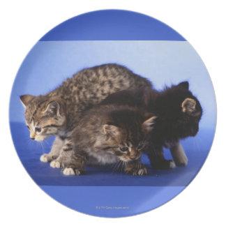 Kitten sitting on top of each other melamine plate