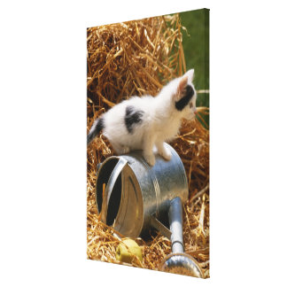 Kitten sitting on top of watering can canvas print