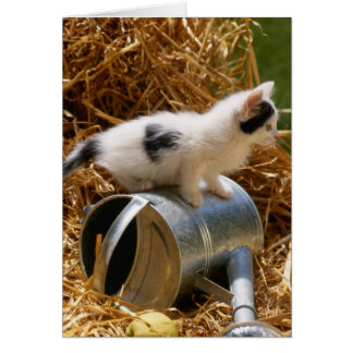 Kitten sitting on top of watering can card