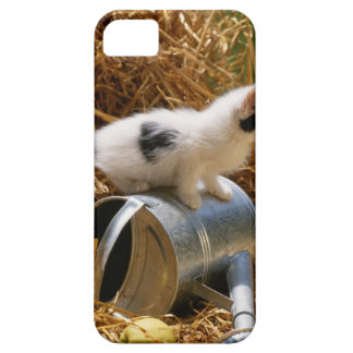 Kitten sitting on top of watering can iPhone SE/5/5s case