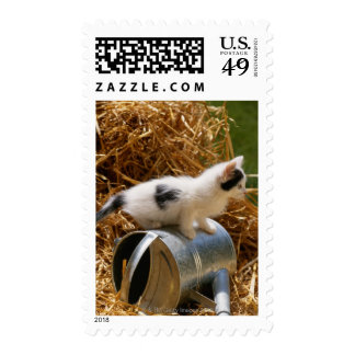 Kitten sitting on top of watering can stamps