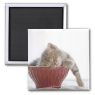 Kitten Sleeping in Bowl 2 Inch Square Magnet