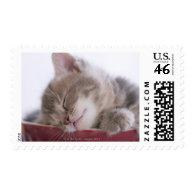 Kitten Sleeping in Bowl 2 Stamp