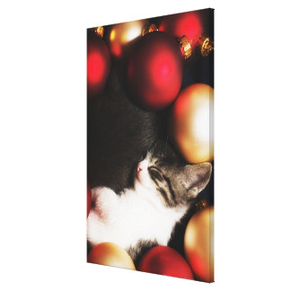 Kitten sleeping in decorations gallery wrapped canvas