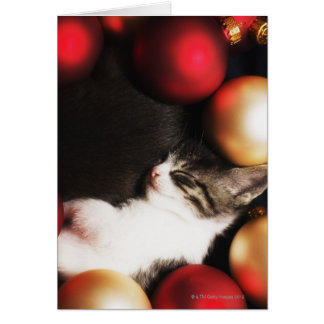 Kitten sleeping in decorations greeting card