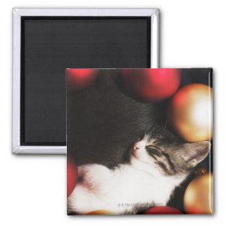 Kitten sleeping in decorations refrigerator magnets