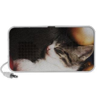 Kitten sleeping in decorations mini speakers