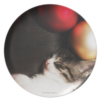 Kitten sleeping in decorations party plates