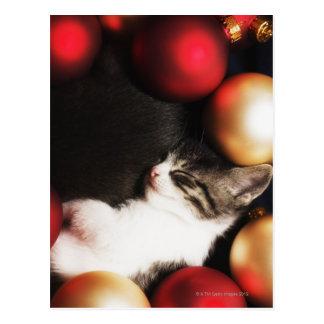 Kitten sleeping in decorations postcard