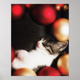 Kitten sleeping in decorations poster