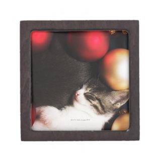 Kitten sleeping in decorations premium trinket box