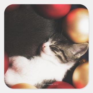 Kitten sleeping in decorations square sticker