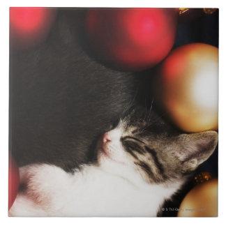 Kitten sleeping in decorations tiles