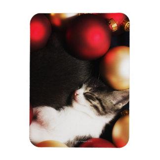 Kitten sleeping in decorations vinyl magnet