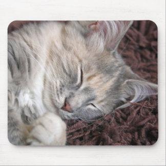 kitten sleeping on a mousepad