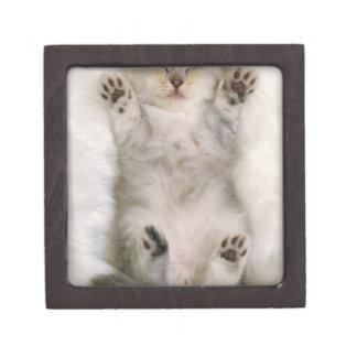 Kitten Sleeping on a White Fluffy Carpet, High Keepsake Box