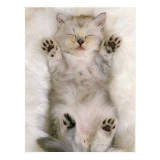 Kitten Sleeping on a White Fluffy Carpet, High Postcard