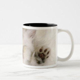 Kitten Sleeping on a White Fluffy Carpet, High Two-Tone Coffee Mug