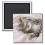 Kitten Sleeping on Towel 2 Inch Square Magnet