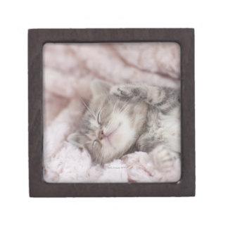 Kitten Sleeping on Towel Jewelry Box