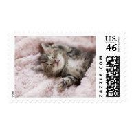Kitten Sleeping on Towel Postage Stamps